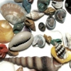 Shell Assortment Dyed& Natural Mixed Bulk